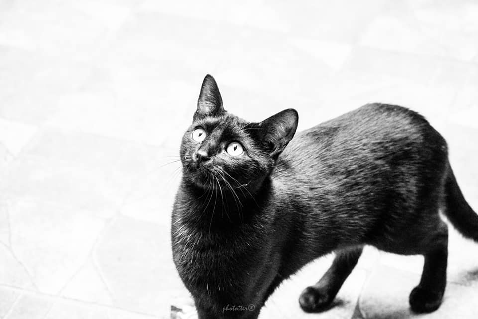 Luca – gazdis