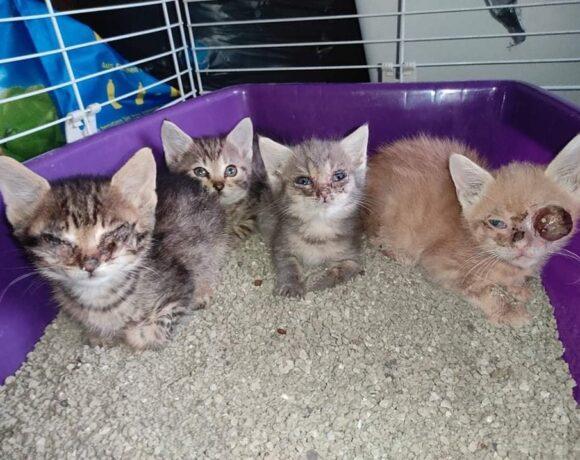Füzesabonyi kiscicák